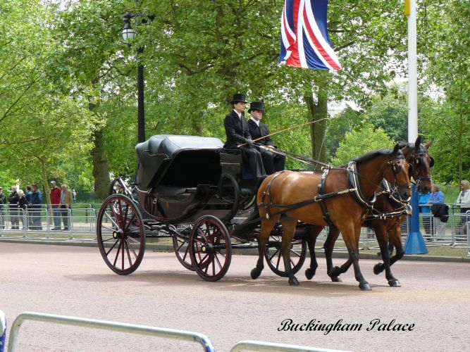 Buckingham   (59)