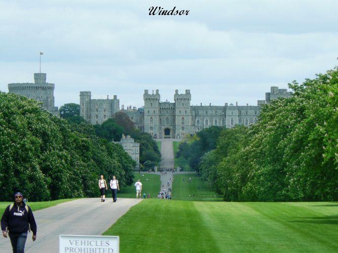 Windsor (11)