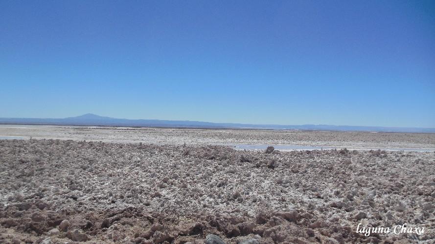 lagune Chaxa2