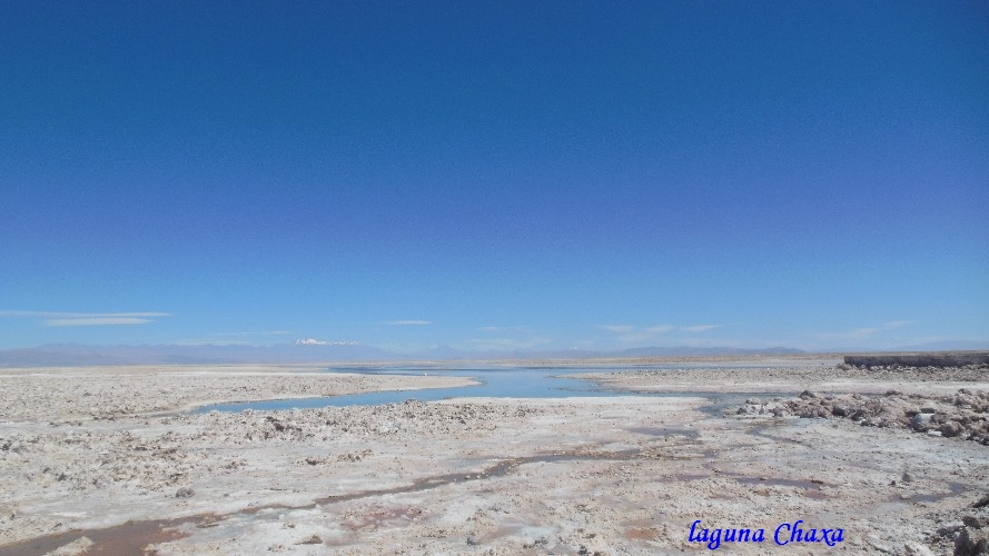 lagune Chaxa3