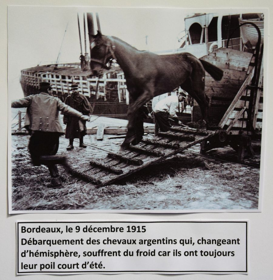 008 animaux guerre 14-18